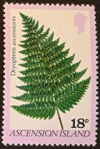 Ascension Island - endemic flora - Dryopteris ascensionis