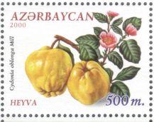 Azerbaijan - Quince, Cydonia oblonga, 2000
