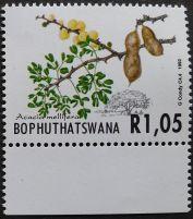 Bophuthatswana, Acacia mellifera, 1992