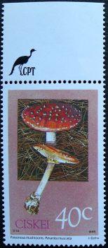Ciskei, Poisonous mushrooms, Amanita muscaria, 1988
