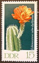 East Germany - flowers - Echinocereus salm-dyckianus