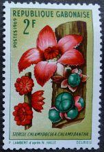 Gabon, Chlamydocola chlamydantha (syn. Sterculia chlamydantha), 1969
