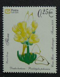 Montenegro, flora, Draba bertiscea, 2008