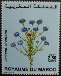 Morocco, flora, Jasione montana, 2000. Morocco does not have a national flower