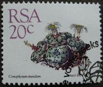 South Africa, Conophytum mundum, 1988