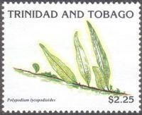 Trinidad & Tobago - ferns, Polypodium lycopodioides