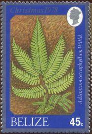 Belize - Adiantum tetraphyllum