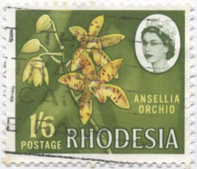 Rhodesia - Ansellia species