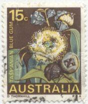 Australia - Eucalyptus globulus, Blue Gum, the floral emblem of Tasmania