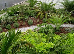 front garden, February 2005