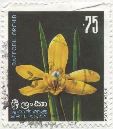 Sri Lanka - Ipsea speciosa
