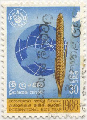 Sri Lanka - Oryza sativa, rice