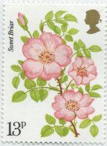 UK - Rosa rubiginosa