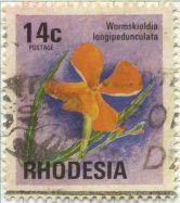 Wormskioldia longipedunculata (Turneraceae)