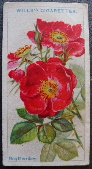 Rose, Meg Merrilies, Briar Rose