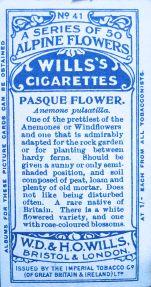 Pasque flower, Anemone pulsatilla, Wills' Alpine Flowers, 1913