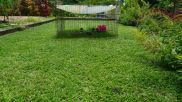 one guinea pig per 20 sq metres: lawn mowing for 7 months each year
