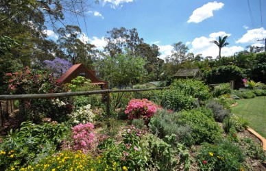 Antonia's sublimely subtropical footpath cottage garden, near Ipswich