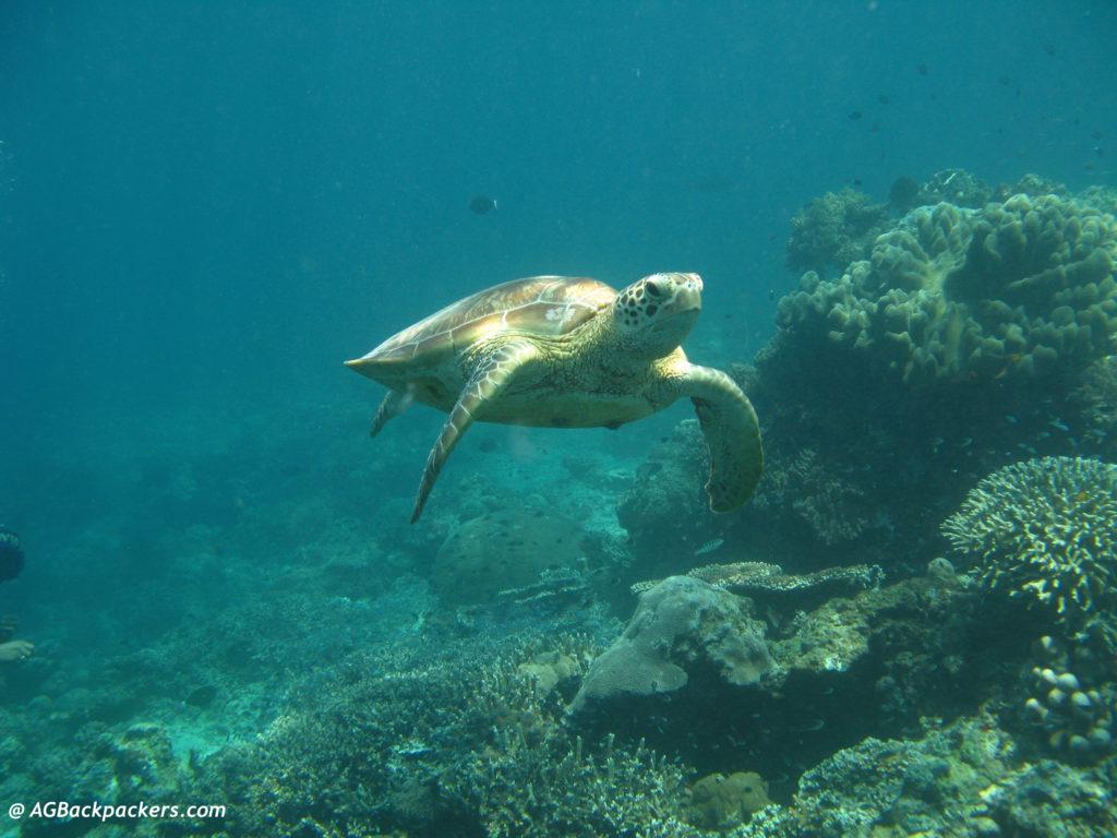 Turtle Komodo National Park Flores Indonesia
