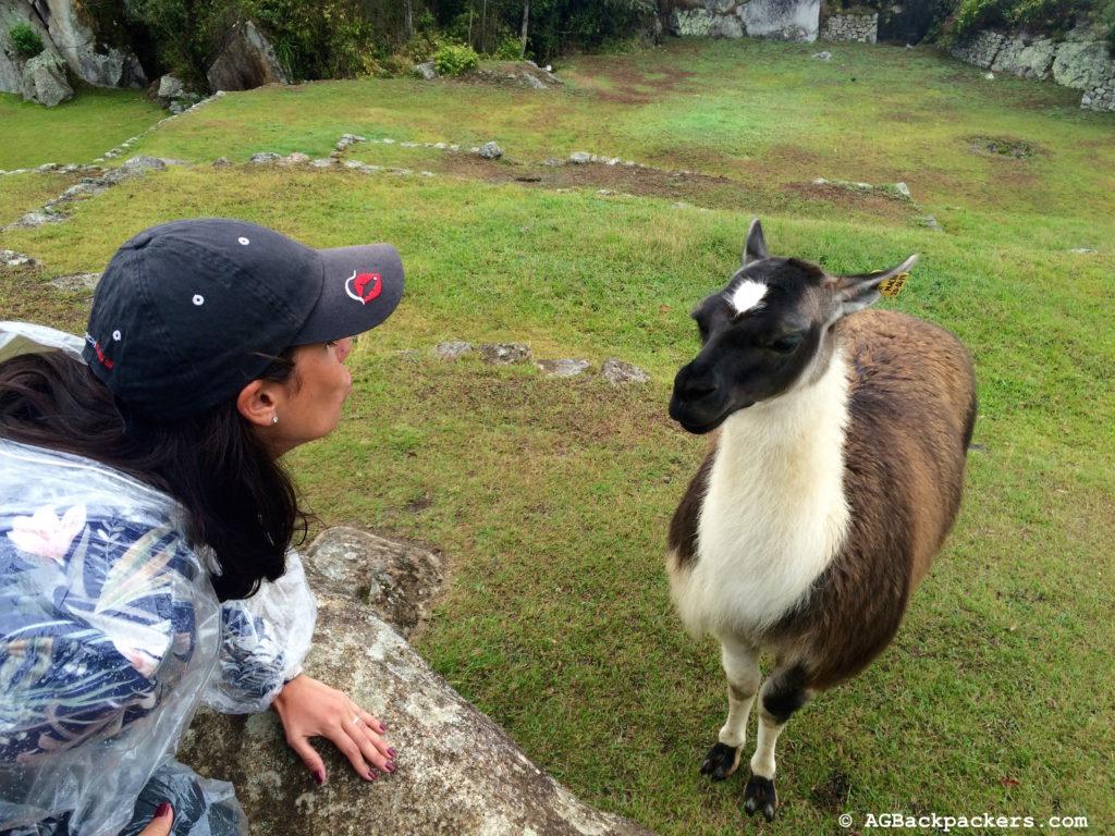 Lama Selfie au Machu Picchu