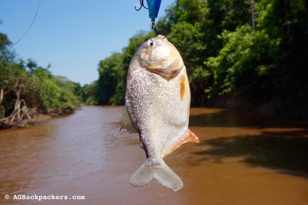 Madidi Expeditions Pampa Amazonie Bolivie La pêche etait bonne. Voici une partie de notre repas du midi