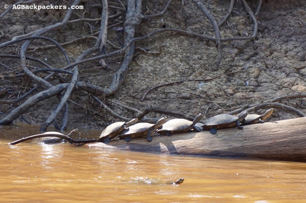 Des tortues font bronzette et posent pour nous lors de notre passage