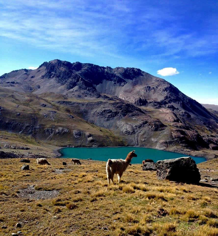 Les lamas sont dans leur monde avec une vue sur le Condoriri