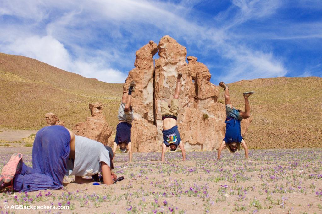 Camelio Sud Lipez Uyuni Bolivie