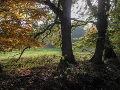 Hansdorfer Brook (Quelle Wolfgang Haupt)