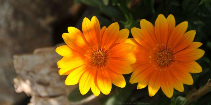 Sommerblumen (Quelle Bruno Krautz)