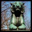princeton tiger