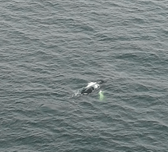 photo from our drone over the whale
