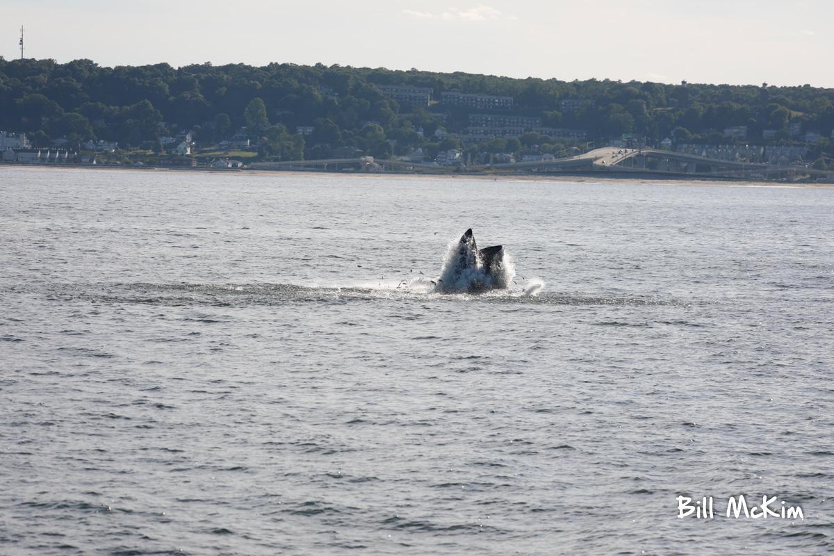 belmar marina jersey shore whale watching tour bill mckim