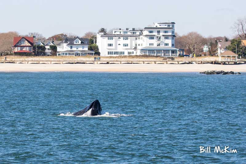, Whale watching trip review and report Belmar & Springlake 11/11/2018, Jersey Shore Whale Watch Tour 2020 Season