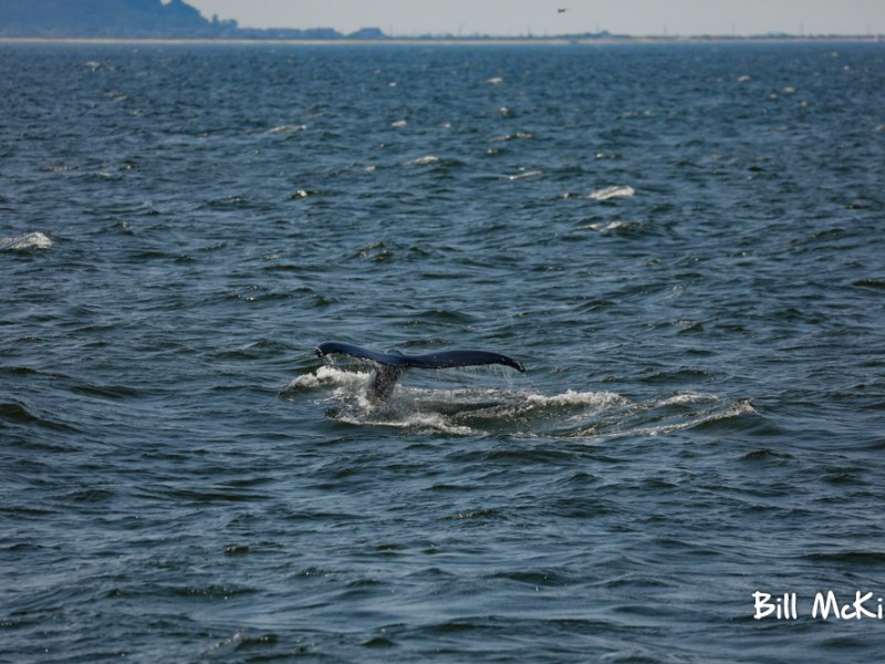 Jersey shore whale watch trip photos July 28th 2019