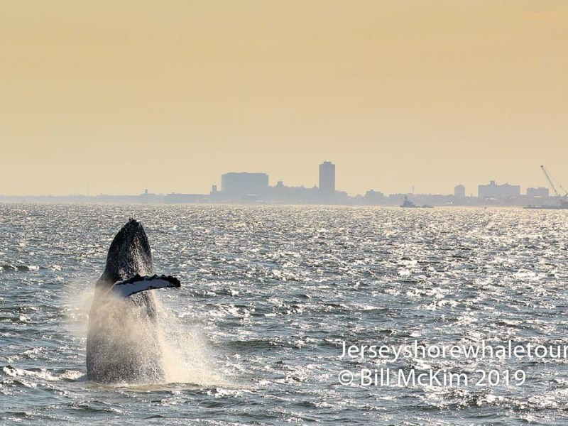 , Photos from 2019 whale watching trips, Jersey Shore Whale Watch Tour 2020 Season