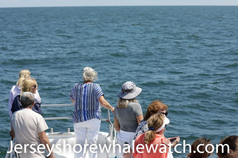 whale watching trip review belmar new jersey