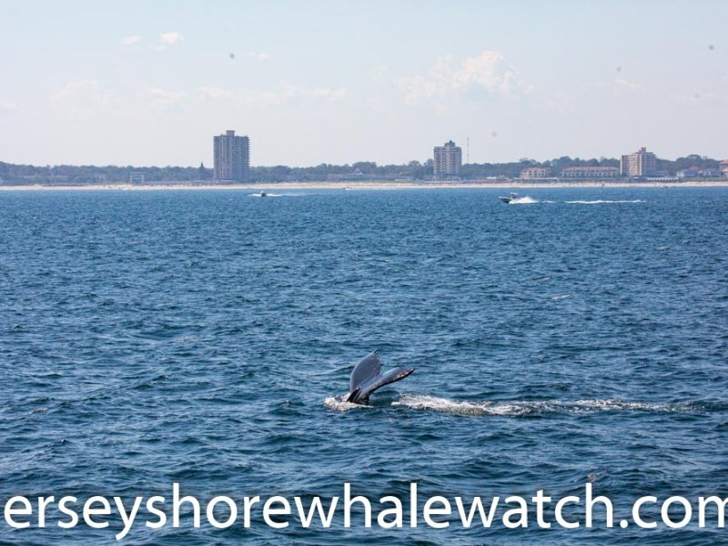 whale watching trip review belmar marina jersey shore whale watch photos by bill mckim