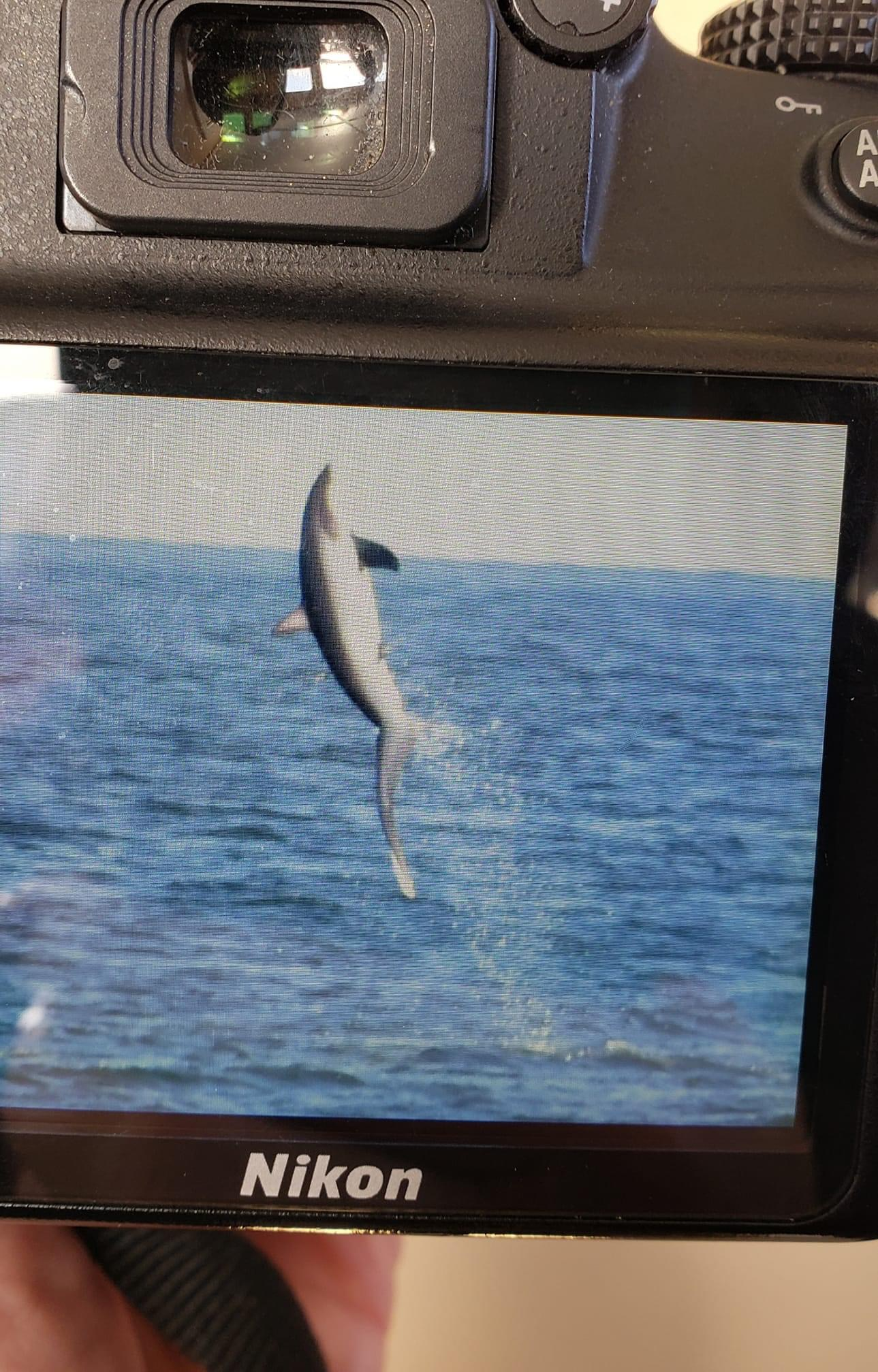 , Friday afternoon whale watching trip fan photo, Jersey Shore Whale Watch Tour 2020 Season