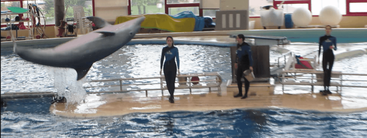 """Admission was a bit expensive, and I always dislike a """"no outside food"""" policy (since we like bringing picnic lunches). Still, there was plenty so see and do. While the dolphin show was short, it was utterly charming.  Four whistle-clicks out of five."""