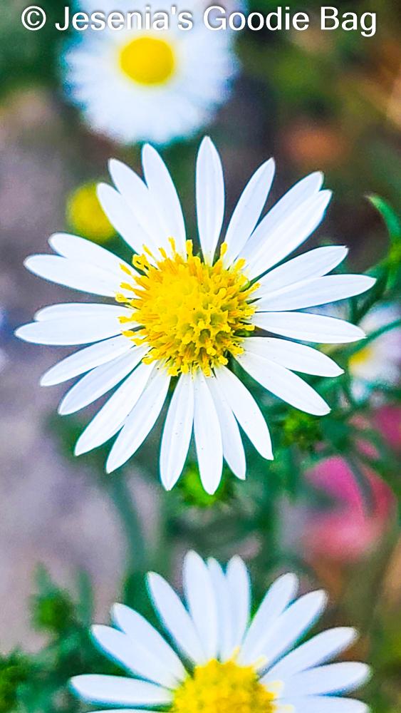 Nature Calls: Enjoying Queens Bloom