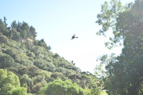 Kamikaze birds, McKee Memorial Scenic Reserve Campground
