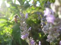 July garden013