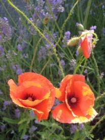 July garden015