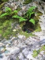 fern rock