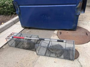 Raccoon Removal  Jesse James Critter Gitters Professional