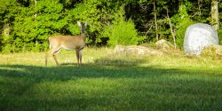 Deer at South Mountains State Park Visitor's Center