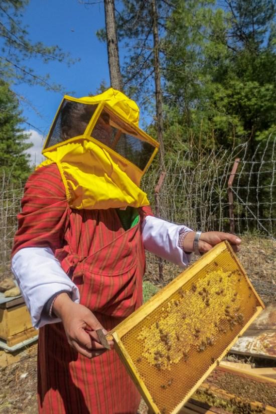 RTC Bees-4
