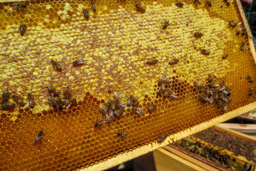 RTC Bees-5