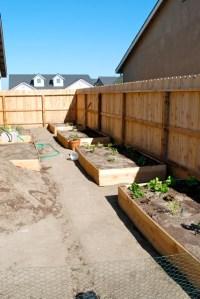 Adventures in Gardening: Let's Try Again!